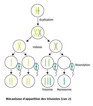 Programme sp cifique - Anomalie chromosomique fausse couche ...